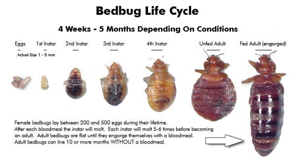 to how steps bed bugs you should try get rid of easy